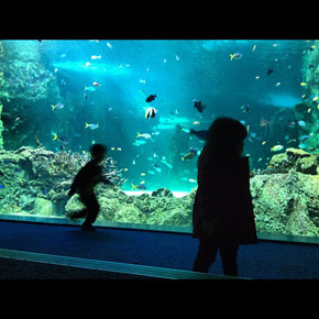 Sydney Aquarium with the kids